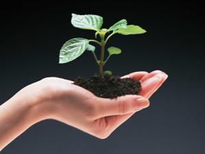 hand_grow-300x225
